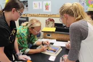 three women looking at model in science lab